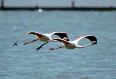 Flamingolar [Fotoğraf : Turan Gültekin]