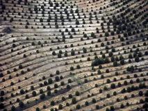 Orman olacak [Fotoğraf : Berk Altınışık]